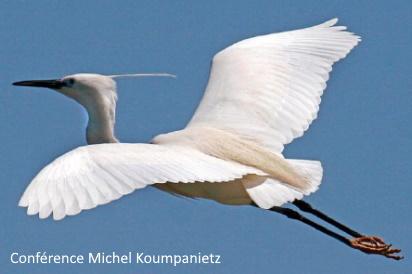 Les Flashs de l'ACR – De l'Oiseau à l'Avion